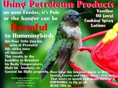 vaseline to keep ants out of hummingbird feeders thriftyfun. Black Bedroom Furniture Sets. Home Design Ideas