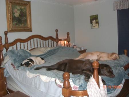 Roxie (Treeing Walker Coonhound)