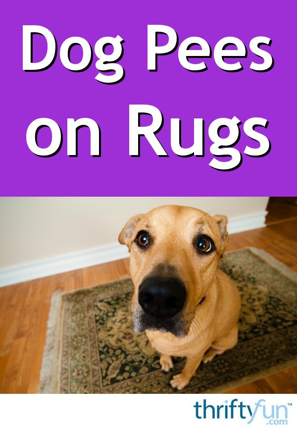 Dog Pees On Rugs Thriftyfun