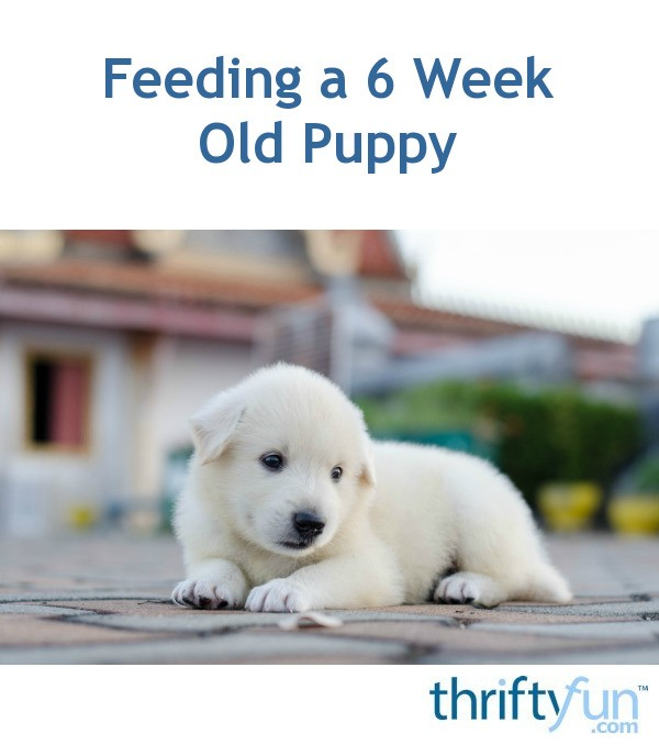 When Can You Switch A Puppy To Dog Food