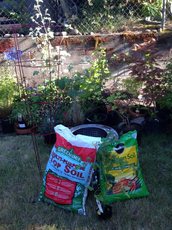 Plant Your Tomato in a Recycled Washing Machine Tub - tub with soil and veggie soil