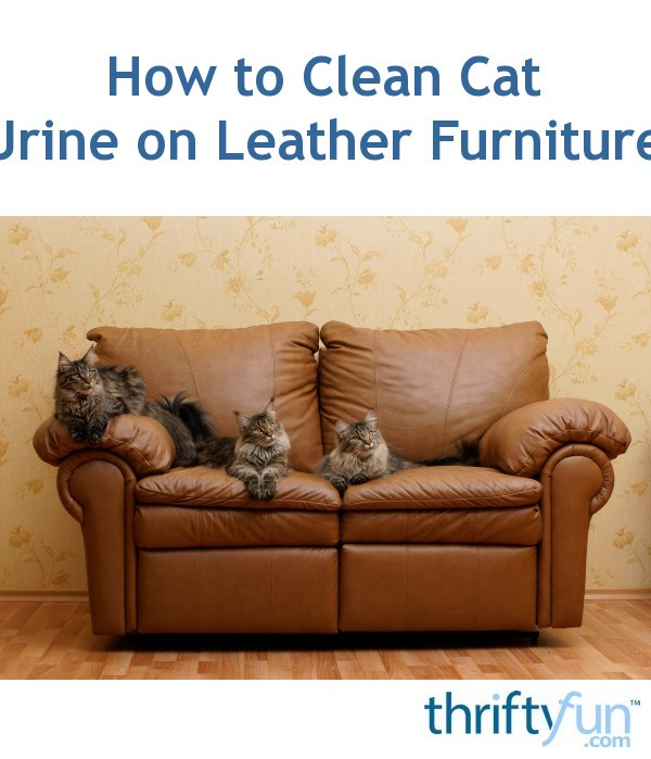 cat urine out of leather couch