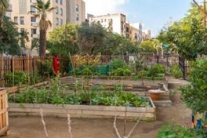 A community garden.