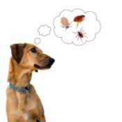 A dog with a thinking bubble containing fleas and ticks.