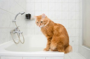 An orange cat sitting on the edge of a bathtub.