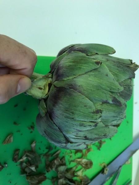 trimming bottom leaves of artichokes
