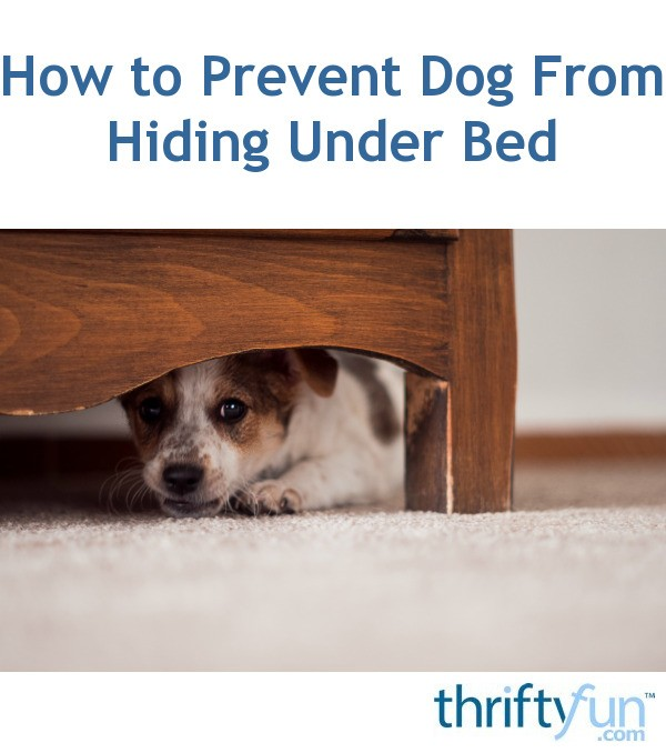 How To Prevent Dog From Hiding Under Bed