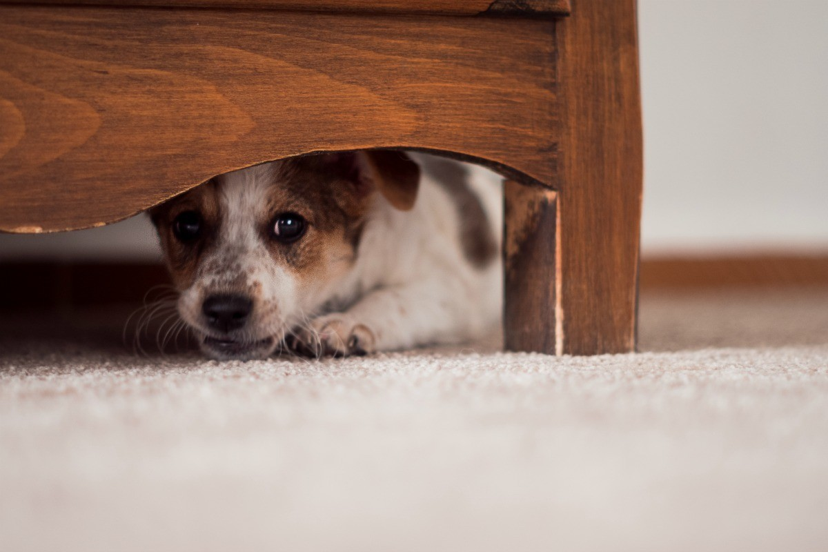 Prevent Dog From Hiding Under Bed