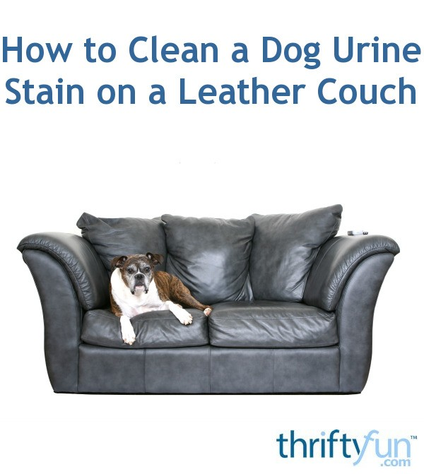 How To Clean A Dog Urine Stain On A Leather Couch Thriftyfun