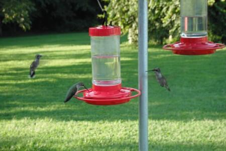 Hummingbirds at a bird feeder.