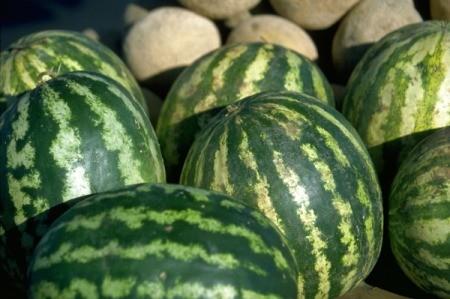 Cantaloupes and Watermelon