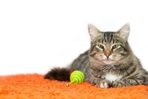 A cat laying on orange carpet.