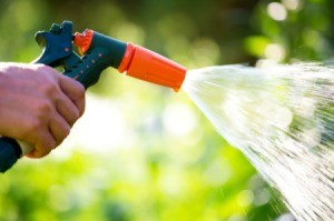Watering using a house and sprayer on a sunny day.