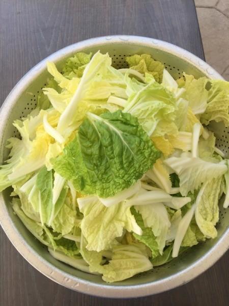 Napa Cabbage ready