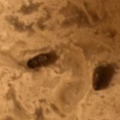 Identifying Bugs
