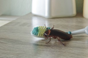 Cockroach on a Toothbrush