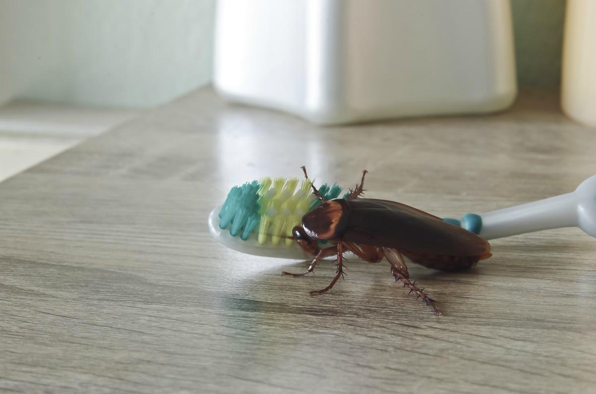 Roaches In A Very Clean Home Thriftyfun