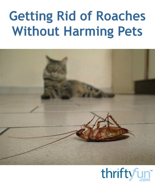 Getting Rid of Roaches Without Harming Pets | ThriftyFun
