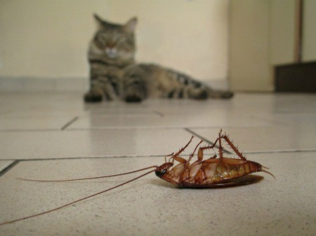 A dead cockroach with a cat in the background.