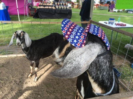 A goat wearing a hat at the fair.