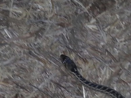 What Kind of Snake Is This?