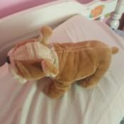 Donating Stuffed Animals - stuffed dog
