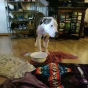 Caring for a Dog with Parvo