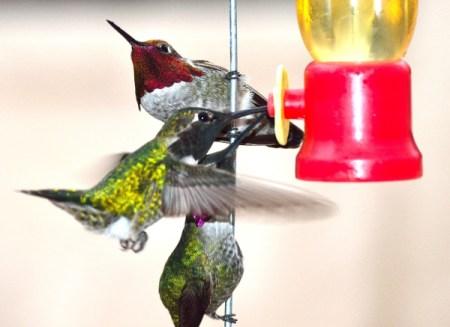 Three hummingbirds crowded around a feeder.