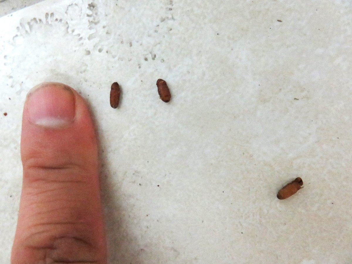 Identifying Insect Eggs | ThriftyFun