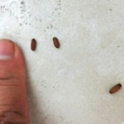 Identifying Insect Eggs