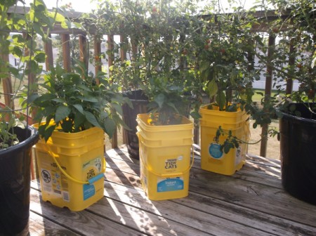 Use Kitty Litter Bins as Pots - for container gardening on deck