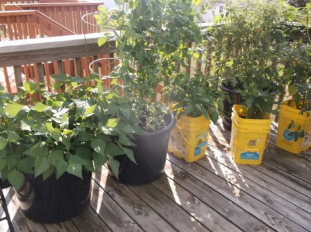 Use Kitty Litter Bins as Pots - kitty litter bins and plastic bucket planters