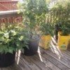 Use Kitty Litter Bins as Pots - kitty litter bins and plastic bucket planters