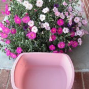 Watering Hanging Baskets - hanging basket and plastic tub