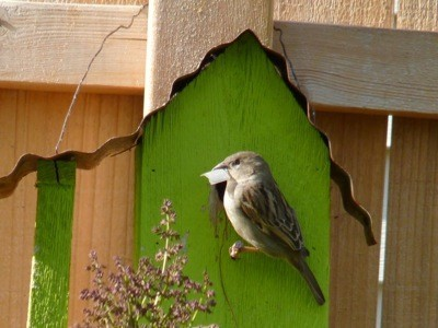 A sparrow at a green birdhouse outside.