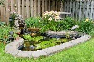 A beautiful fish pond in a backyard.