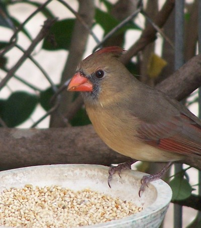 A bird at a backyard birdfeeder.