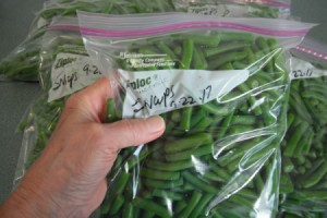A ziplop bag of string beans, ready for the freezer.
