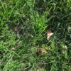 How to Reseed Bald Spots in Your Lawn - spot after grass has grown in