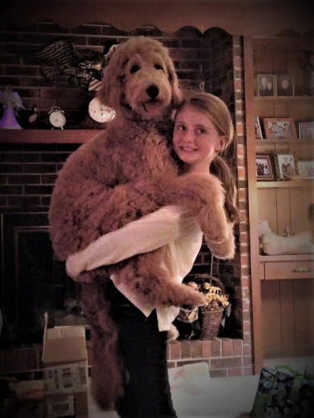 Molly and Mally (Goldendoodle) - young girl holding a dog
