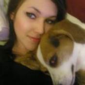 Sadie (Beagle)