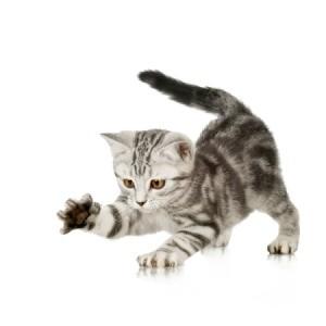 Sharp Kitten Claws