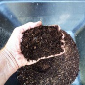 Free Houseplant Soil - hand holding dark leaf compost