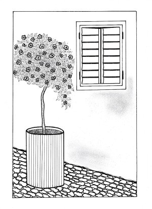 View on the Garden Adult Coloring Page - potted shrub against wall with shuttered window