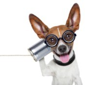 Small dog wearing glasses holding up a can phone.