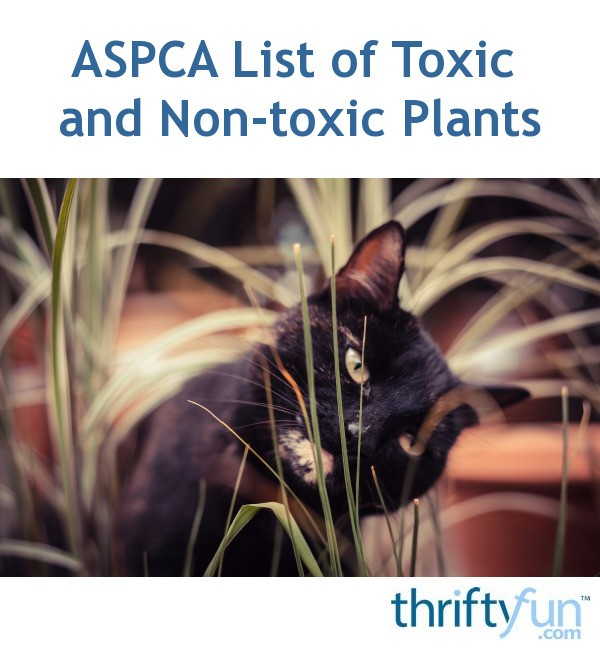 ASPCA List Of Toxic And Non-toxic Plants
