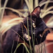 ASPCA List of Toxic and Non-toxic Plants - tortie cat and plant