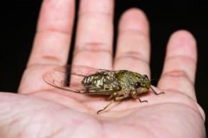 Man Holding Cicada