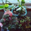 5 Tips for Winter Houseplants - group of plants