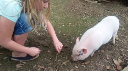 Bessy (Pot-bellied Pig)